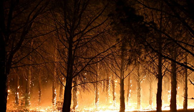 fuegoForestal