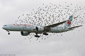Clica en la imagen para ver en grande  Nombre:  birds2.jpg Vistas: 15 Tamaño:  69,0 KB
